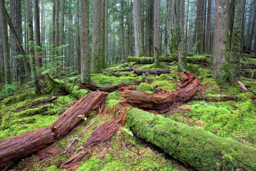 tree therapy forest bathing pacific northwest